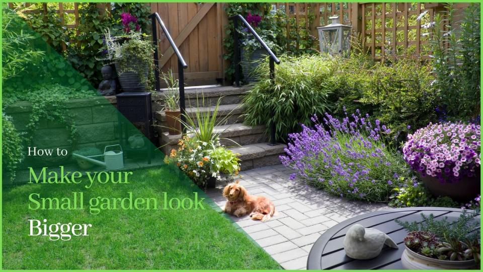 How to make your small garden look bigger - Neutrino Burst