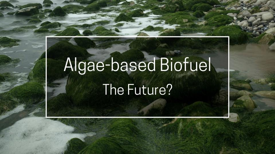 Algae-based biofuel can be the future - NB!