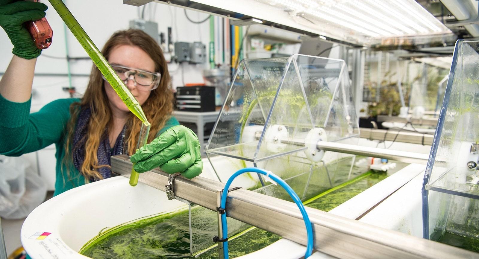 Producing algae in labs